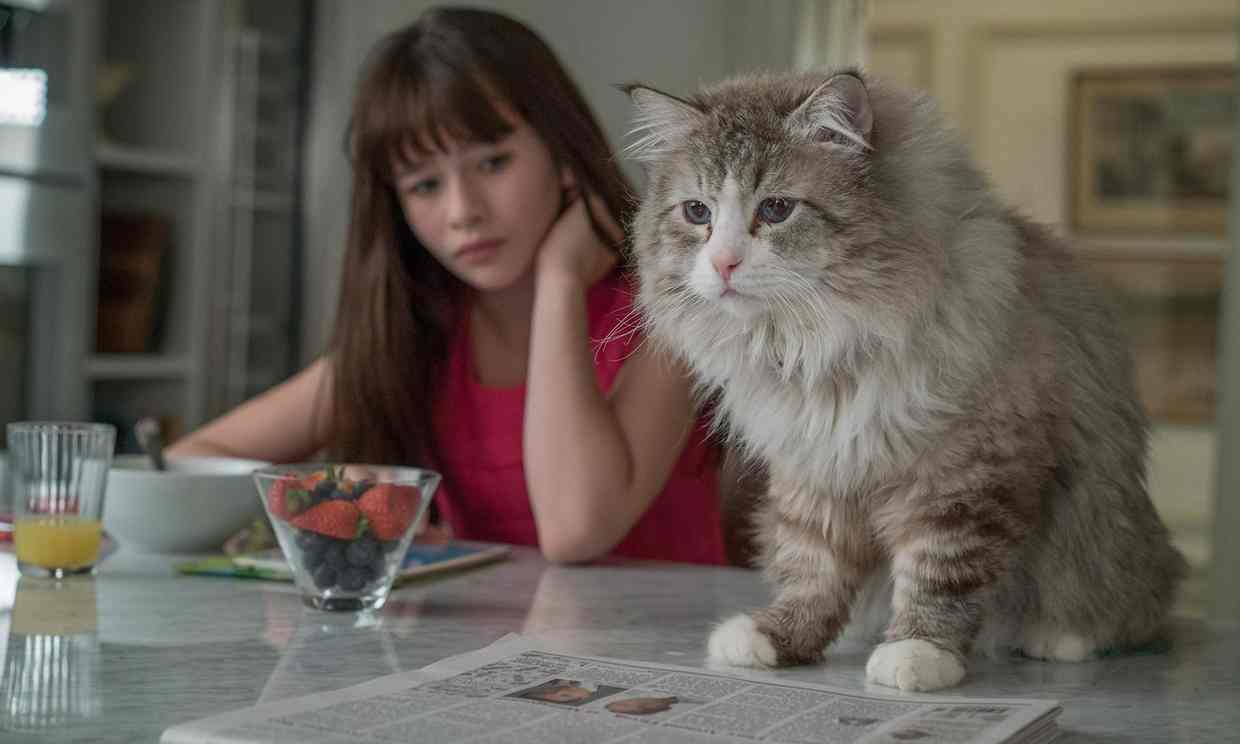 Nine Lives Film Review